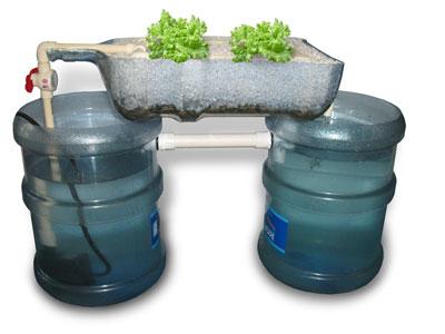 Countertop Aquaponics System : CounterTop Aquaponics System